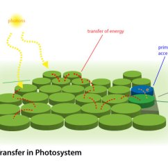 Light Reactions Photosystem Diagram Narva Trailer Plug Wiring 7 Pin Photosynthesis I Biology Visionlearning Electron Transfer In 2