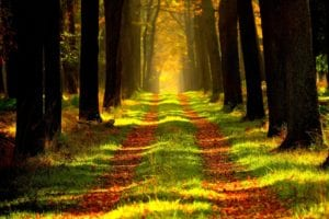 Tall trees lining path with colored leaves and bright sun