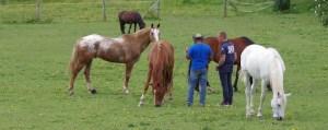 Coaching avec le cheval