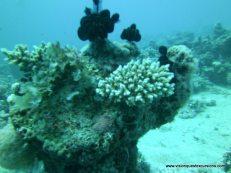 Coral Beach Israel