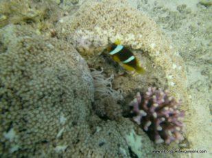 Coral Beach Life