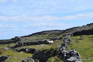Spirit Totem on Inishmore