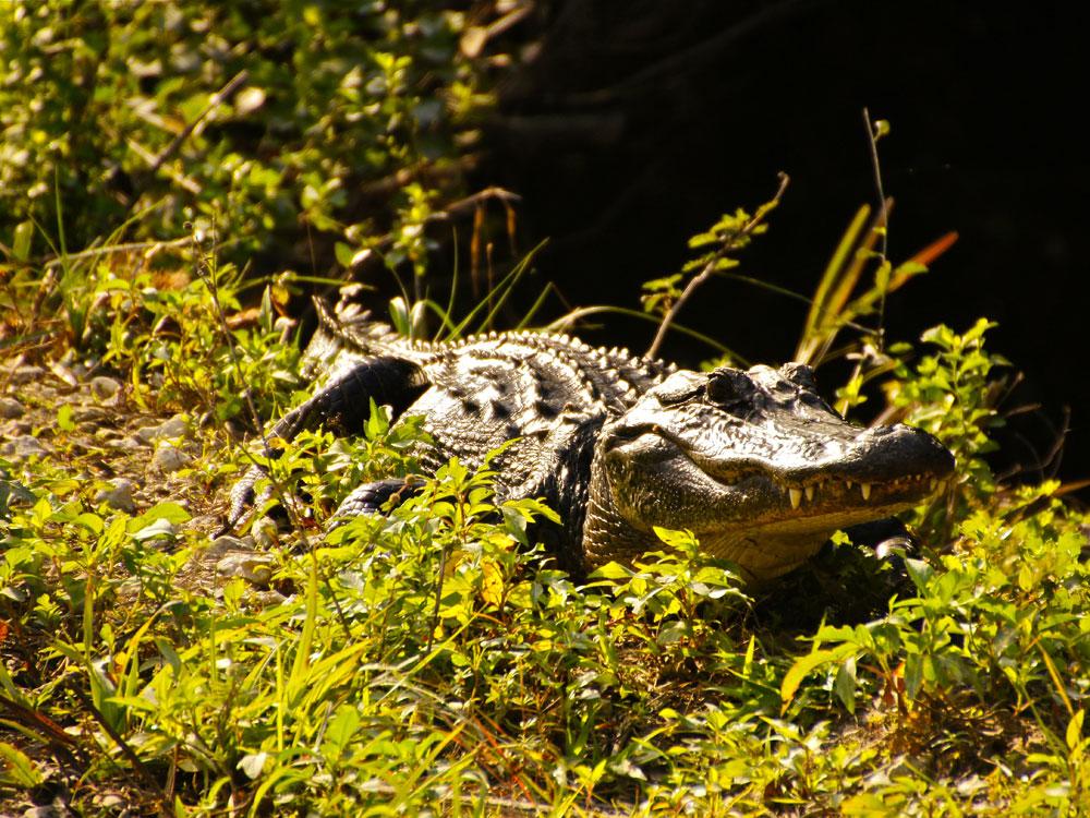 Everglades National Park Florida  Die WeltklasseSmpfe
