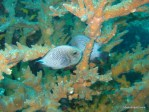 underwater fish and coral photo