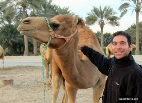 Camels in Bahrain - great addition to any Bahrain itinerary