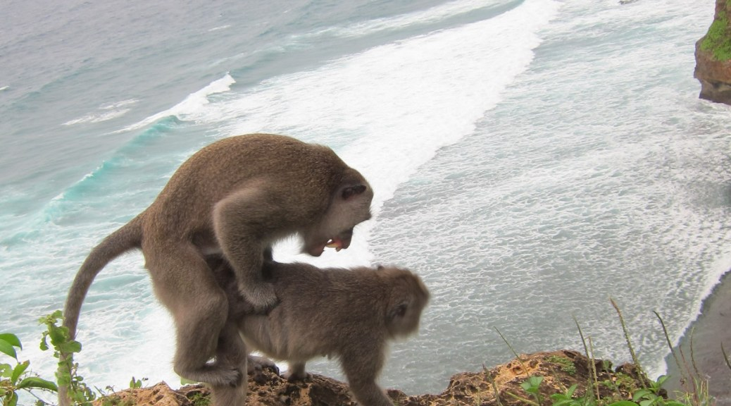 Monkey having sex in Bali, Indonesia, Ulu Watu,