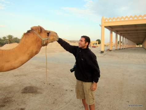 Feeding a camel at the Royal Camel Farm in Bahrain