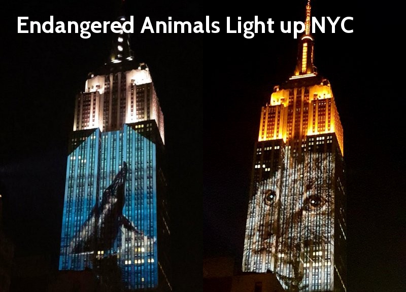 Endangered animals on the Empire State Building - cover image from Visit50