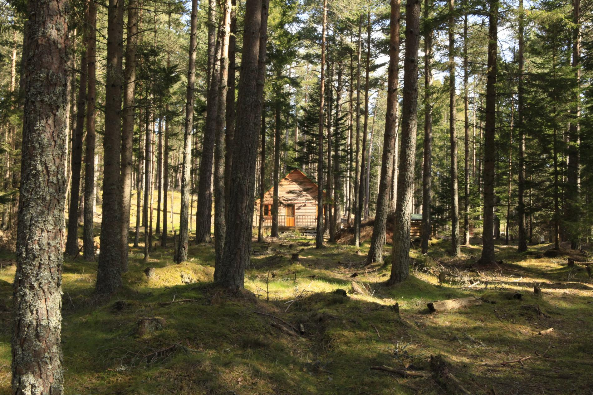 Cairngorm Lodges  Luxury Selfcatering in a Forest Setting
