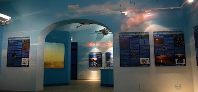 Museo della migrazione e osservatorio ornitologico – Ventotene