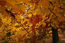 outono-15