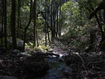 Bosque del Cedro La Gomera