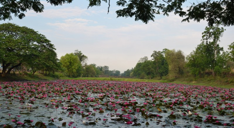 Temple moat in full bloom