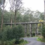 noojee trestle bridge to noojee 4 - Noojee Trestle Bridge to Noojee