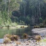 cooperscreek - Coopers Creek