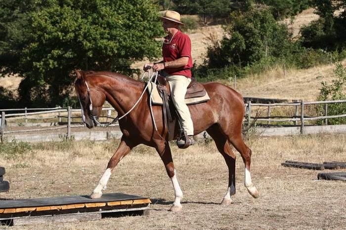 corsi-addestramento-puledri-e-cavalli-Castell'Azzara-Il Cornacchino