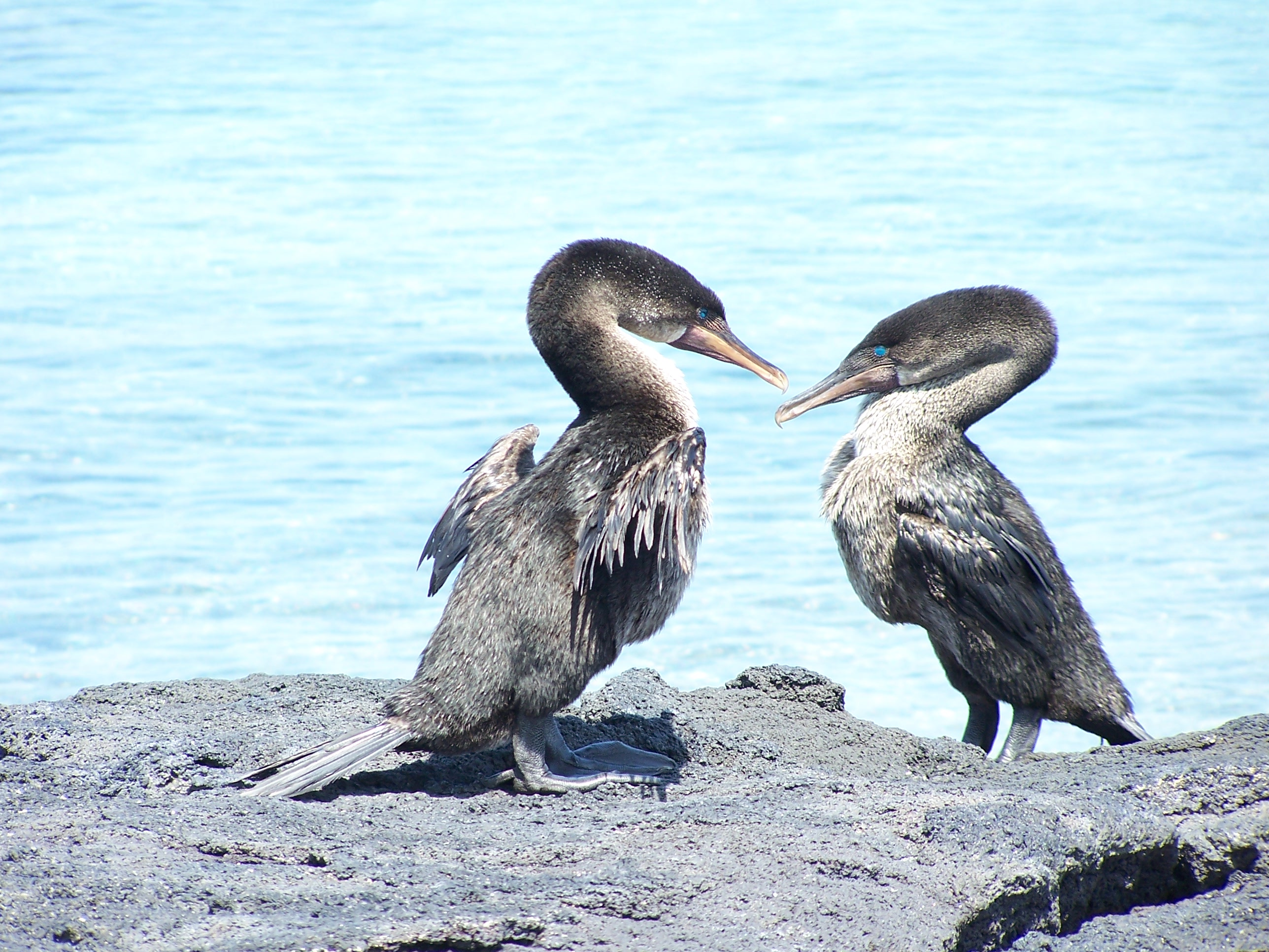 A Close Encounter With Five Endemic Species Of The Galapagos Islands