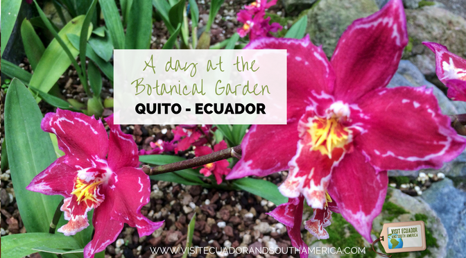 Things to do in Quito: A day at the Botanical Garden