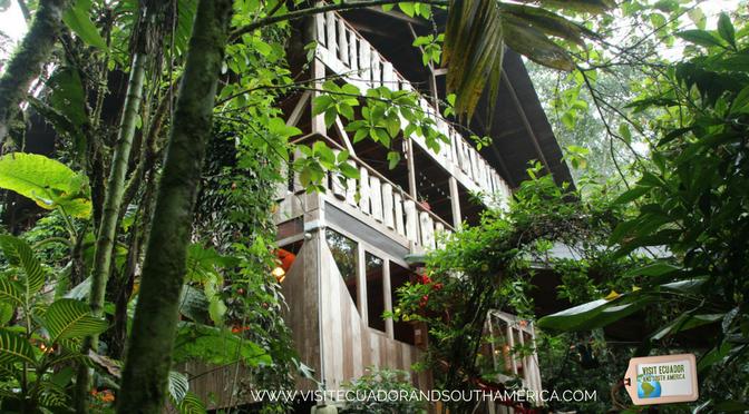 Casa Divina Lodge _