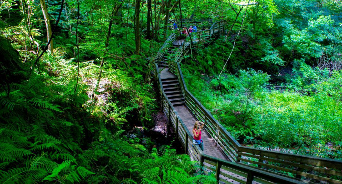 Niagara Falls Wallpaper Nature Os Parques Do Estado Da Fl 243 Rida E As Fontes De 225 Gua Doce
