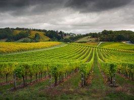Vente de propriété viticole à Bordeaux