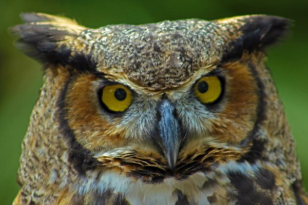 Environmental Center Night Owls Of North Florida - Events