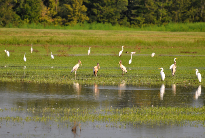 Tallahatchie National Wildlife Refuge