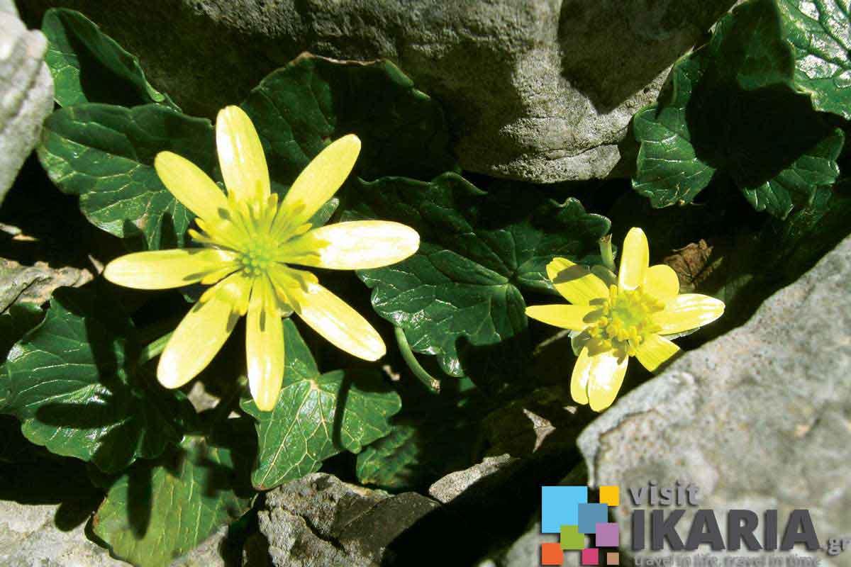 Flora  Fauna  Visit Ikaria