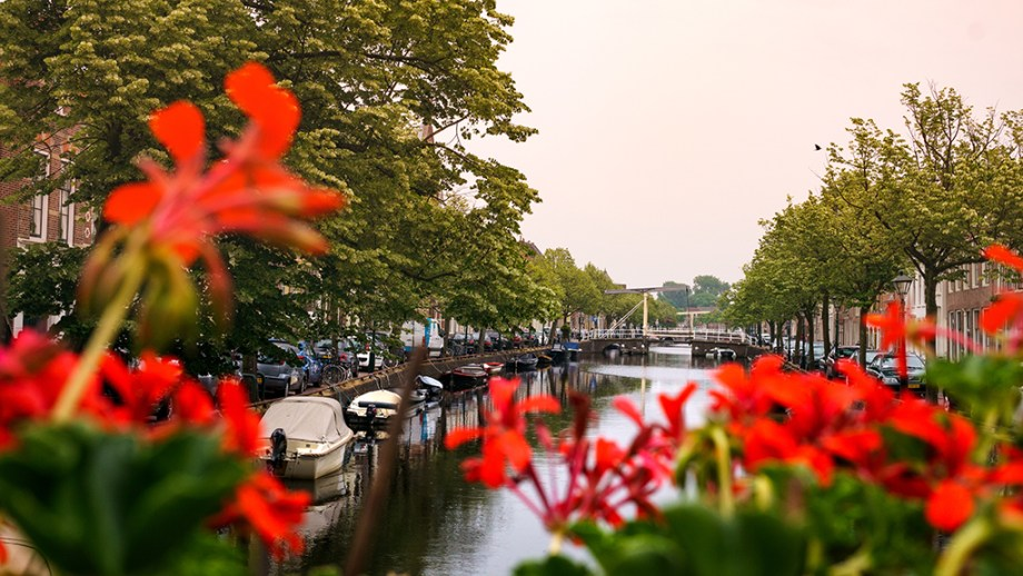 Things to do in Alkmaar The Netherlands | Most beautiful cities of The Netherlands | Visiting The Dutch Countryside travel blog The Netherlands