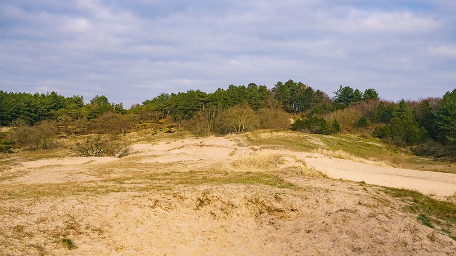 Things to do in Schoorl Noord Holland The Netherlands | Best nature reserves in The Netherlands | Visiting the dunes of Schoorl | Most special day trips from Amsterdam and Alkmaar