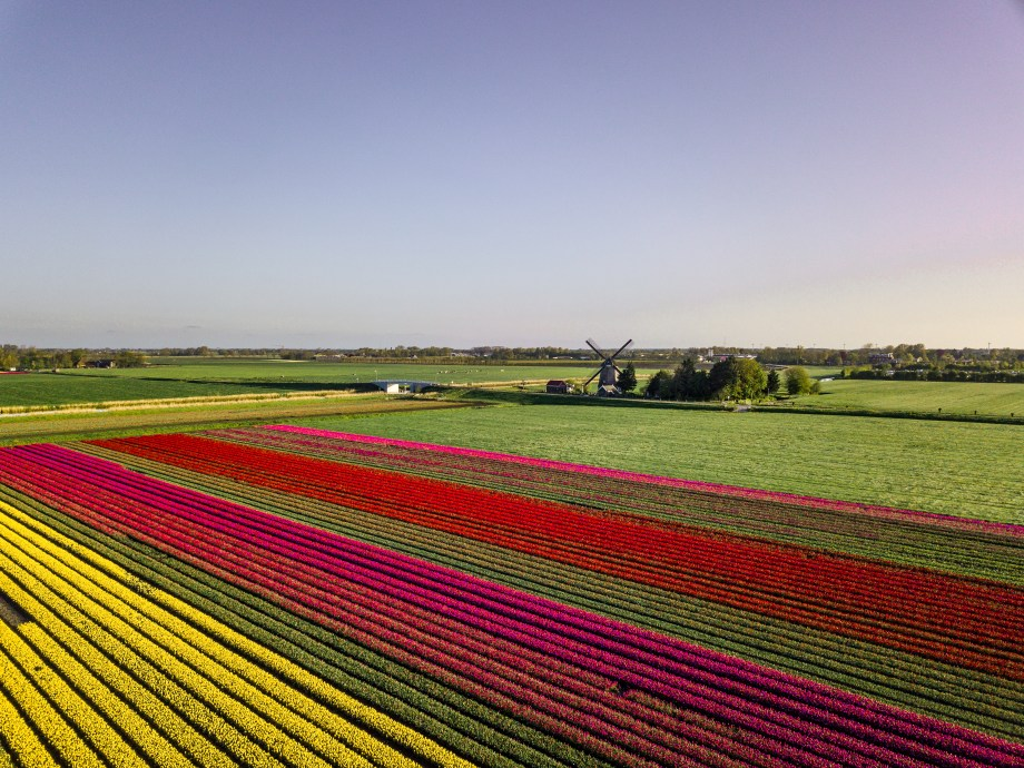 Where to stay near tulip fields in Noord Holland The Netherlands | Budget accommodation near tulip fields in The Netherlands | Top accommodation in Noord Holland |Tulip fields to see visit in Noord-Holland, Netherlands