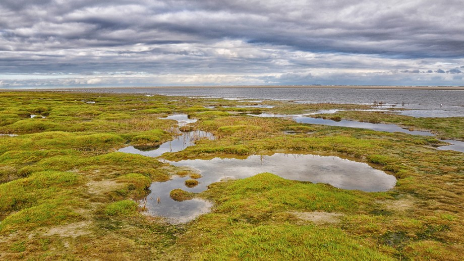One of the nature reserves on the island of Ameland: marshes can be seen with green vegetation