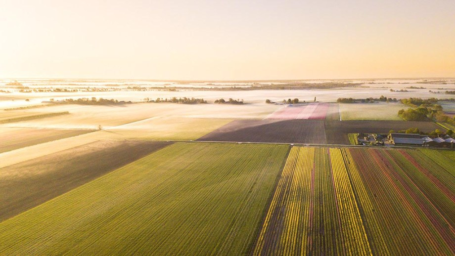 aerial view of tulip fields in The Netherlands (Noord North Holland) during sunrise in spring
