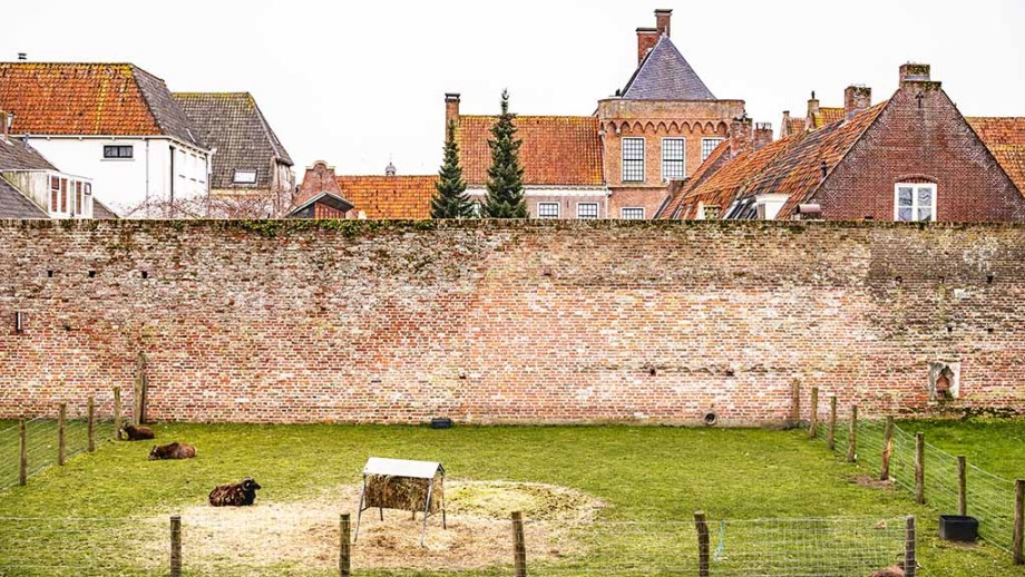 View on a meadow and an old brick city wal with historic buildings in Elburg, The Netherlands