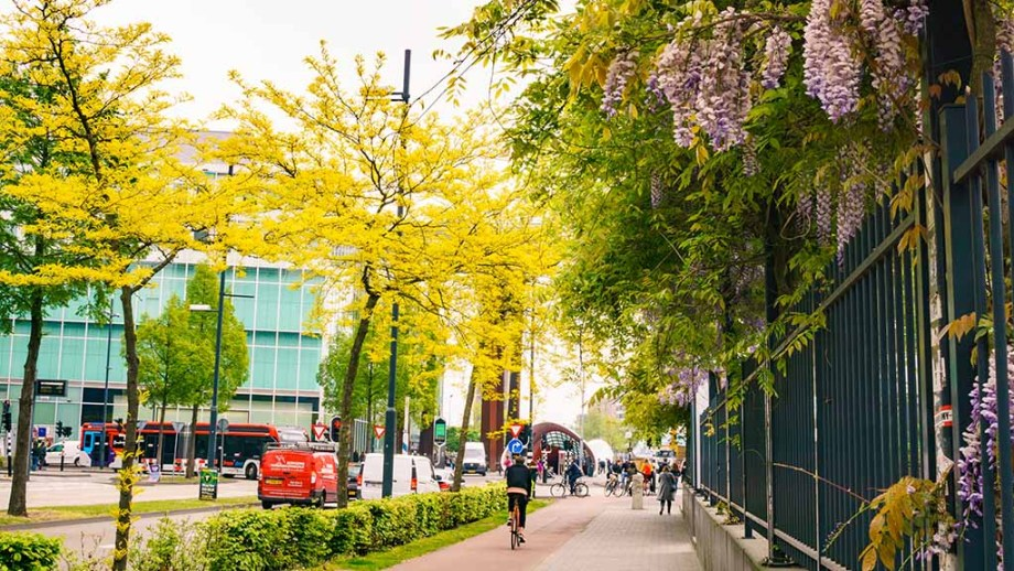 a view on blooming trees during a spring day in Eindhoven city The Netherlands