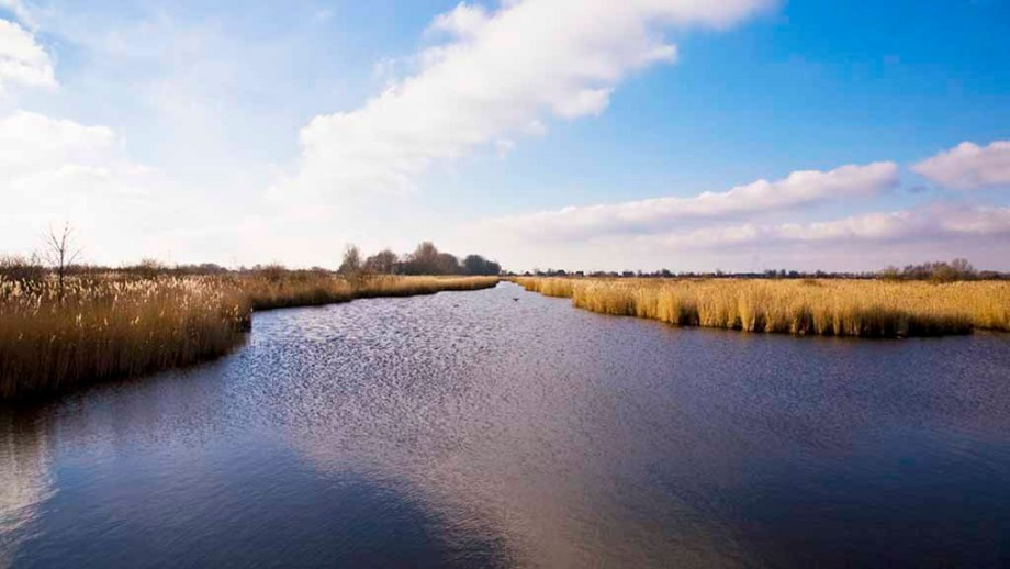 Discover nature reserve Guisveld in The Netherlands. Water is surrounded by little islands and reed.