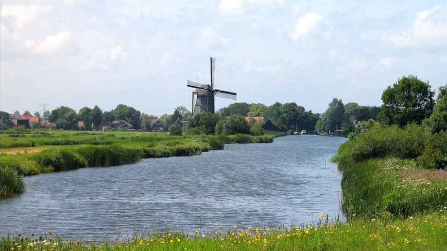 The area of Zaanstreek is a typical Dutch area with scenery. Here you see flowers in the foreground with a river flowing between meadows. In the middle of the background there is an old Dutch windmill that is placed before typical Dutch houses