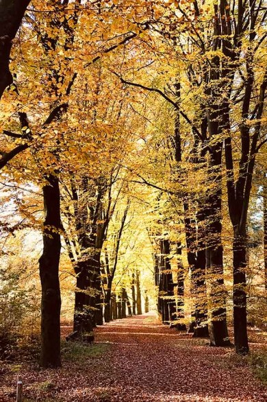 One of the nature reserves and national parks in The Netherlands during autumn with brown leaves on trees