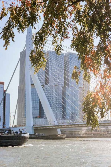 Rotterdam during autumn/ fall: A view on the Erasmusbridge and high buildings