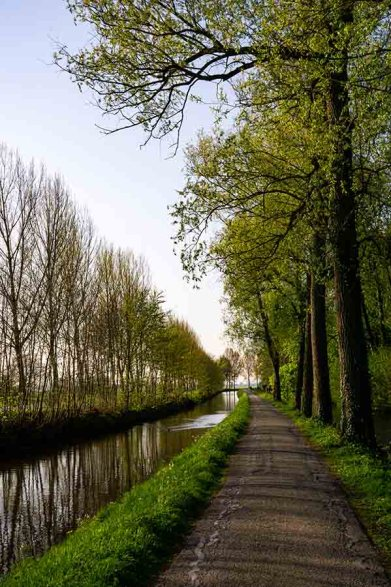 A photo of a small road surrounded by trees and a little river in the Dutch countryside