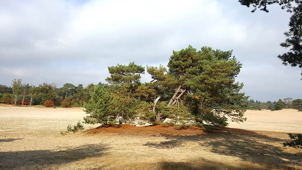 dunes in soesterduinen near the town of soest in the Netherlands
