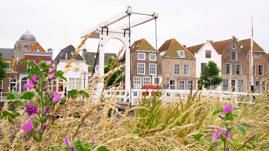 view on canal houses and wild flowers in the old harbour of the city of veere, zeeland, the netherlands