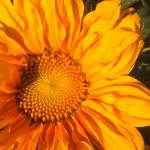 Willow Grove Gardens and Pumpkin Patch