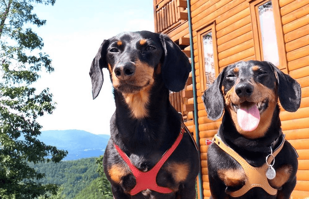 Crusoe the Celebrity Dachshund Adventures in the Smoky
