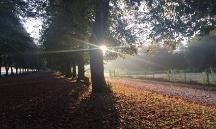 7 things to do in Northwich this autumn