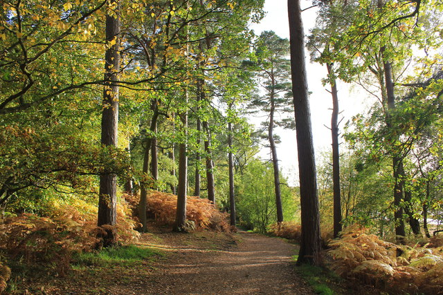 Delamere Forest Walk