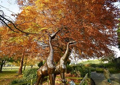 Giraffes Oswestry Park