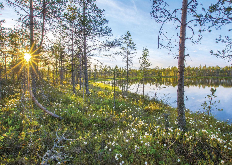 Pyhä-Häkin kansallispuisto Saarijärvi