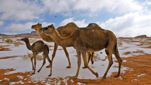 Tourism in the Tabuk Region: Rich Architecture, Deserts and More - Visit  Saudi Official Website