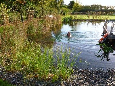 Baron at Bucknell Wild Swimming